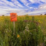 CATCH THE BUZZ – Nation's Top Pollinator Habitat Experts Converge in Minneapolis for Pollinator Symposium on Feb. 17th