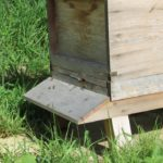September In The Apiary